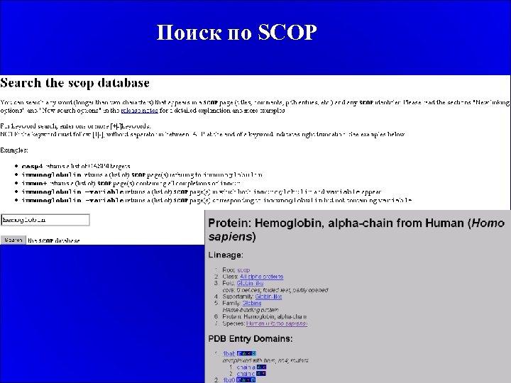 Поиск по SCOP