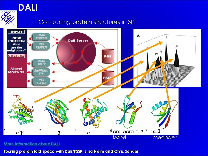DALI Comparing protein structures in 3 D a/b b a anti parallel b barrel