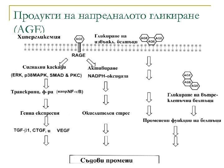 Продукти на напредналото гликиране (AGE)