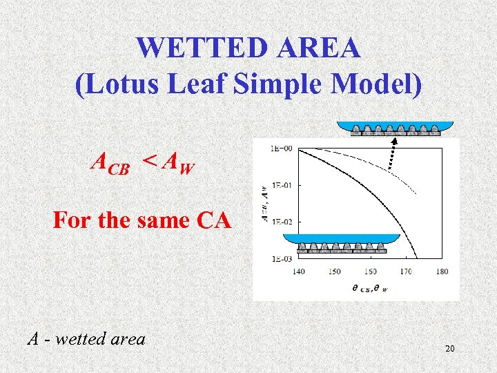 WETTED AREA (Lotus Leaf Simple Model) ACB < AW For the same CA A