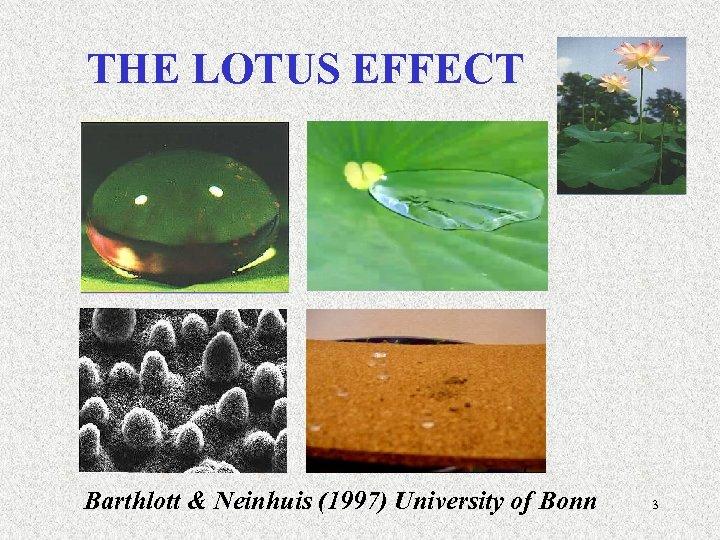 THE LOTUS EFFECT Barthlott & Neinhuis (1997) University of Bonn 3
