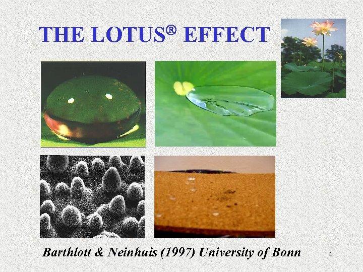 THE LOTUS EFFECT Barthlott & Neinhuis (1997) University of Bonn 4