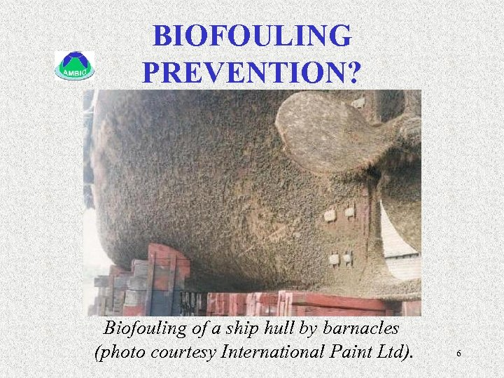 BIOFOULING PREVENTION? Biofouling of a ship hull by barnacles (photo courtesy International Paint Ltd).