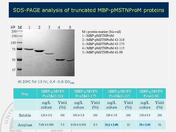 SDS-PAGE analysis of truncated MBP-p. MSTNPro. M proteins k. Da 250 150 M 1