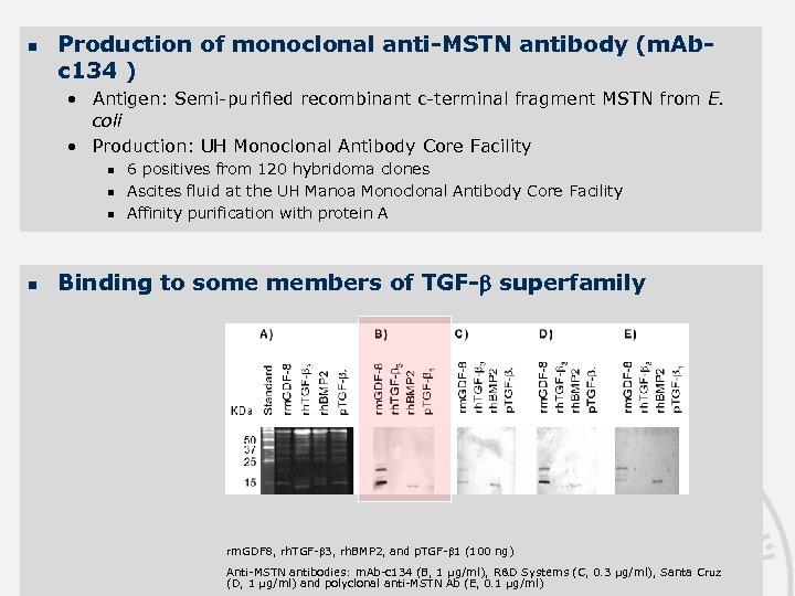 n Production of monoclonal anti-MSTN antibody (m. Abc 134 ) • Antigen: Semi-purified recombinant