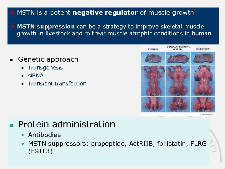 Ø MSTN is a potent negative regulator of muscle growth Ø MSTN suppression can