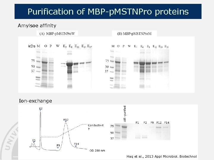 Purification of MBP-p. MSTNPro proteins Amylsoe affinity k. Da Ion-exchange Haq et al. ,