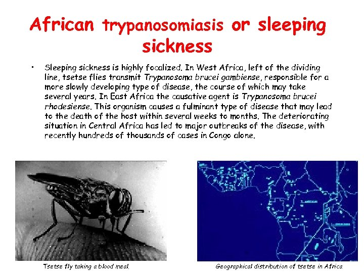 African trypanosomiasis or sleeping sickness • Sleeping sickness is highly focalized. In West Africa,