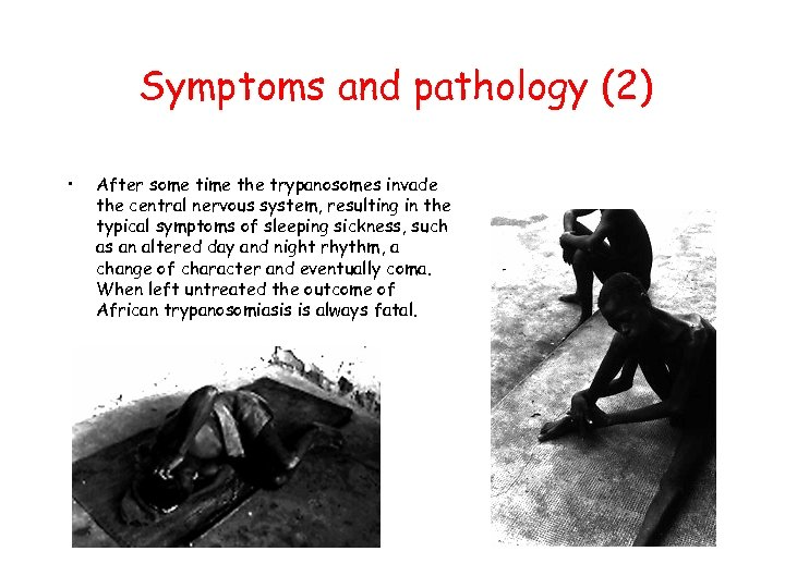 Symptoms and pathology (2) • After some time the trypanosomes invade the central nervous