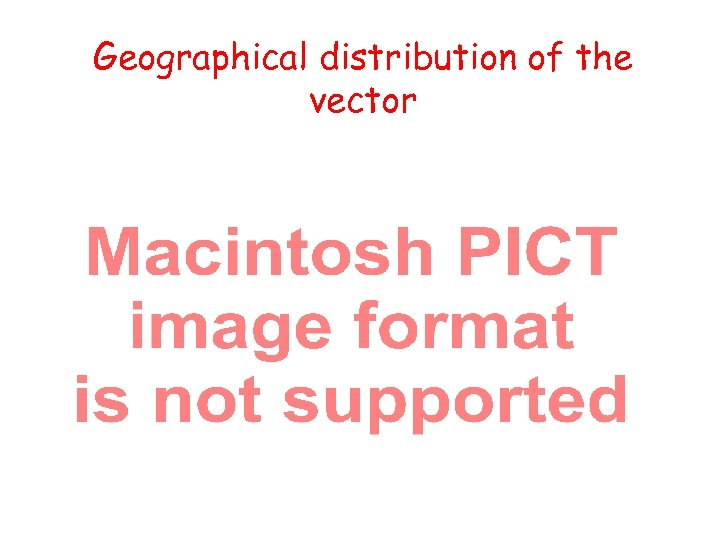 Geographical distribution of the vector