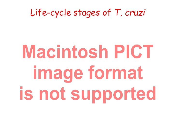 Life-cycle stages of T. cruzi