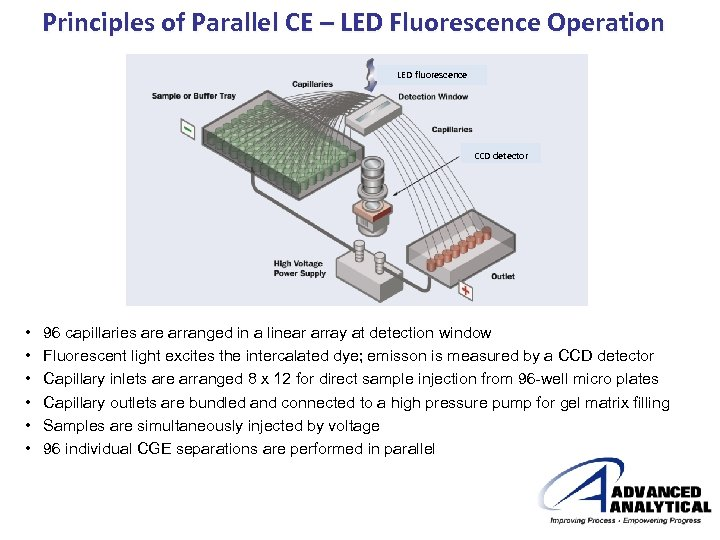 Principles of Parallel CE – LED Fluorescence Operation LED fluorescence CCD detector • •