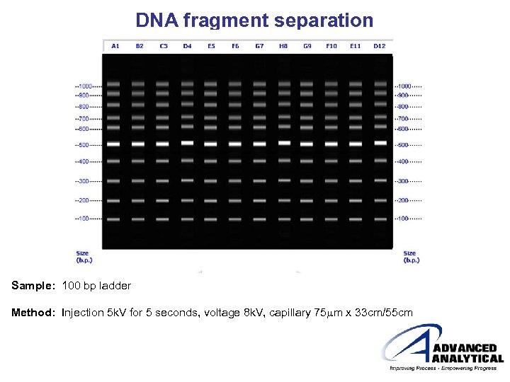 DNA fragment separation Sample: 100 bp ladder Method: Injection 5 k. V for 5