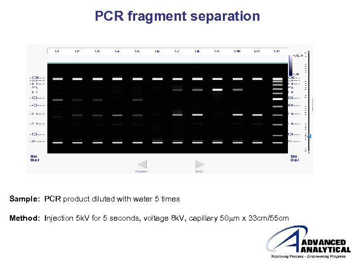 PCR fragment separation Sample: PCR product diluted with water 5 times Method: Injection 5