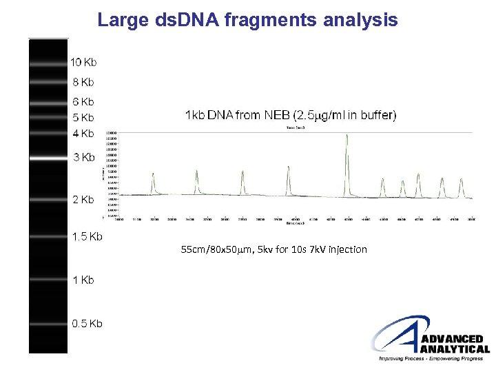 Large ds. DNA fragments analysis 55 cm/80 x 50 mm, 5 kv for 10