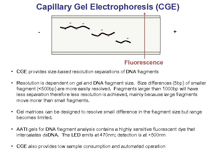 Capillary Gel Electrophoresis (CGE) - - + - - Fluorescence • CGE provides size-based