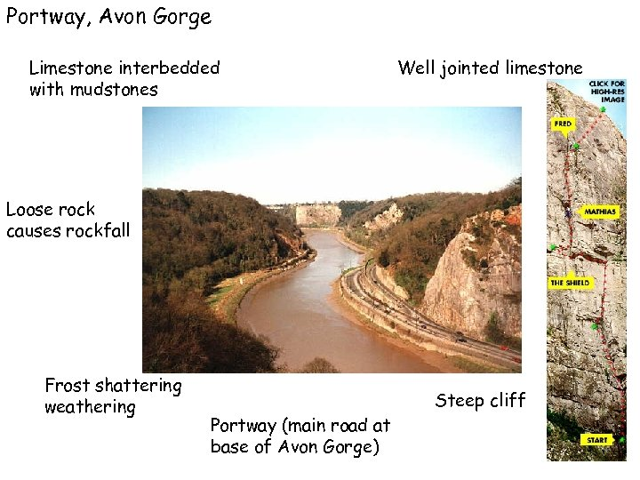Portway, Avon Gorge Limestone interbedded with mudstones Well jointed limestone Loose rock causes rockfall