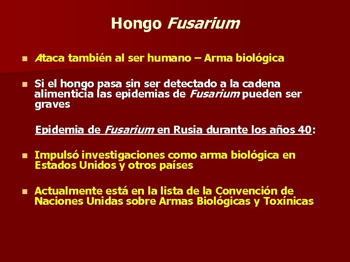 Hongo Fusarium n Ataca también al ser humano – Arma biológica n Si el