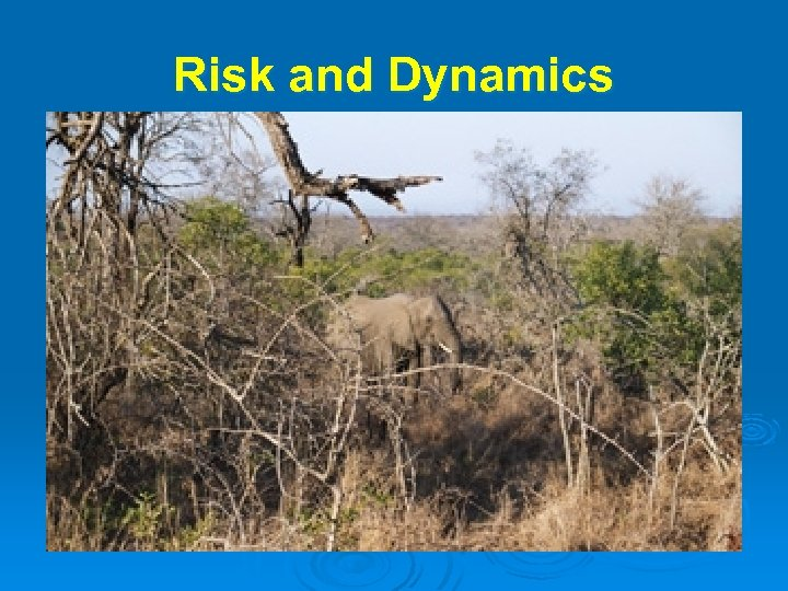 Risk and Dynamics