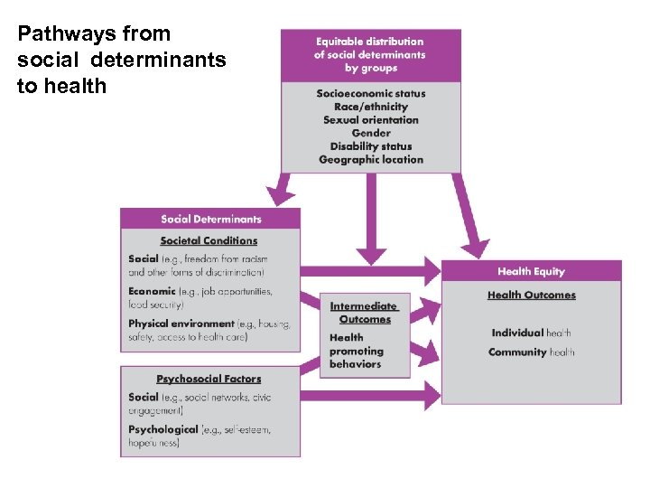 Pathways from social determinants to health