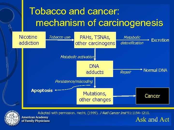 Tobacco and cancer: mechanism of carcinogenesis Nicotine addiction Tobacco use PAHs, TSNAs, other carcinogens