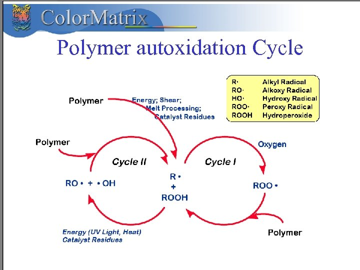 Polymer autoxidation Cycle