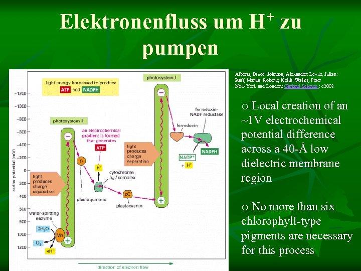 Elektronenfluss um pumpen + H zu Alberts, Bruce; Johnson, Alexander; Lewis, Julian; Raff, Martin;