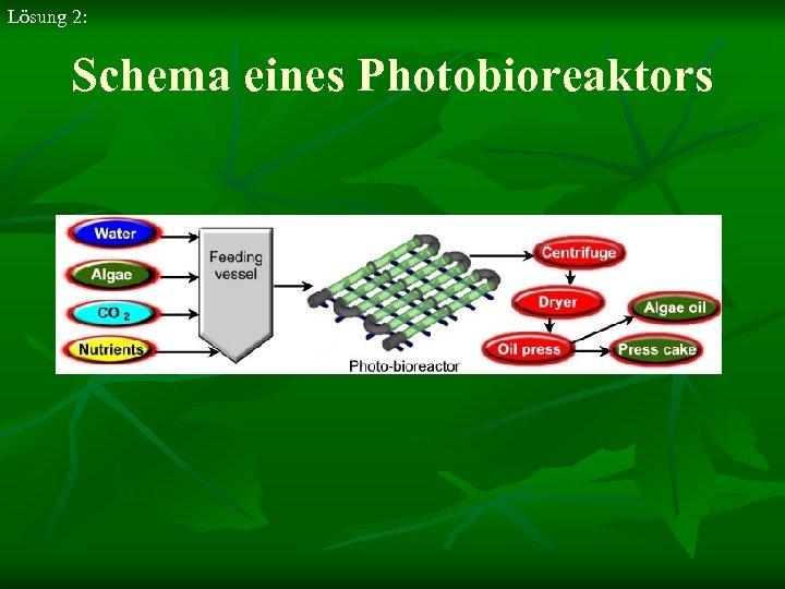 Lösung 2: Schema eines Photobioreaktors