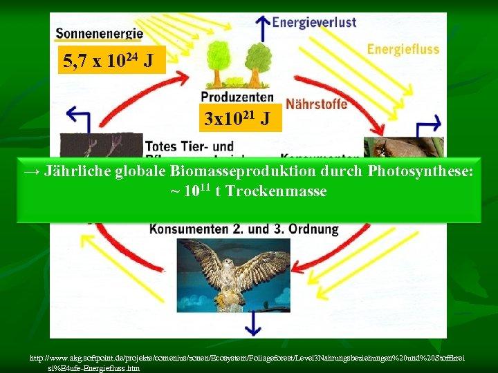 5, 7 x 1024 J 3 x 1021 J → Jährliche globale Biomasseproduktion durch