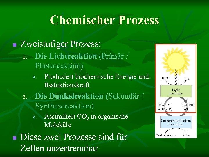 Chemischer Prozess n Zweistufiger Prozess: 1. Die Lichtreaktion (Primär-/ Photoreaktion) Ø 2. Die Dunkelreaktion