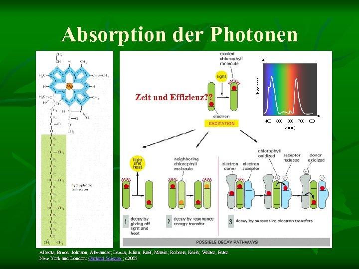 Absorption der Photonen Zeit und Effizienz? ? Alberts, Bruce; Johnson, Alexander; Lewis, Julian; Raff,