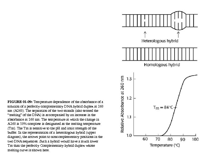 FIGURE 01 -09: Temperature dependence of the absorbance of a solution of a perfectly