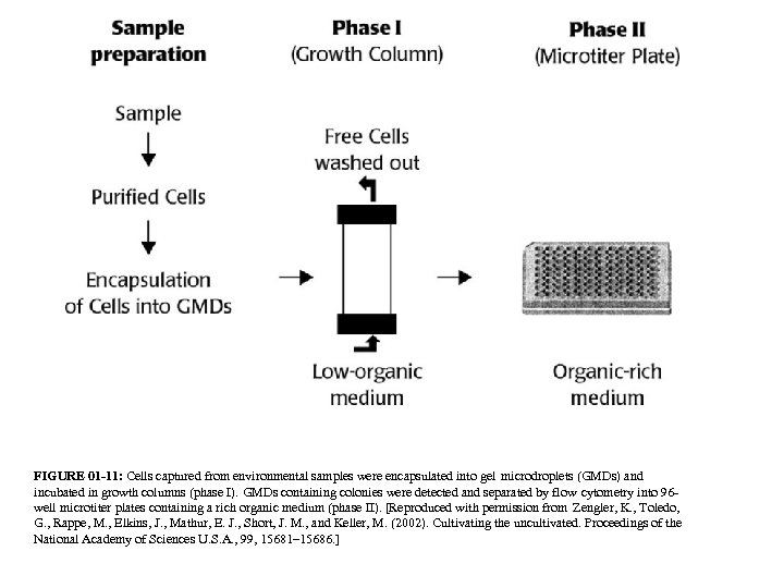 FIGURE 01 -11: Cells captured from environmental samples were encapsulated into gel microdroplets (GMDs)