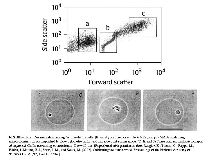 FIGURE 01 -12: Discrimination among (A) free-living cells, (B) singly occupied or empty GMDs,