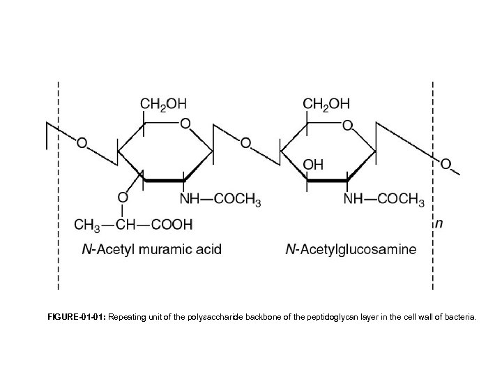 FIGURE-01 -01: Repeating unit of the polysaccharide backbone of the peptidoglycan layer in the