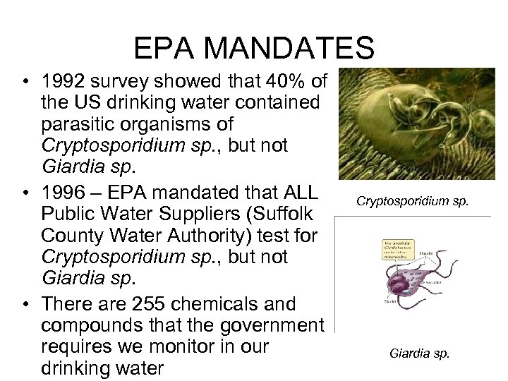 EPA MANDATES • 1992 survey showed that 40% of the US drinking water contained