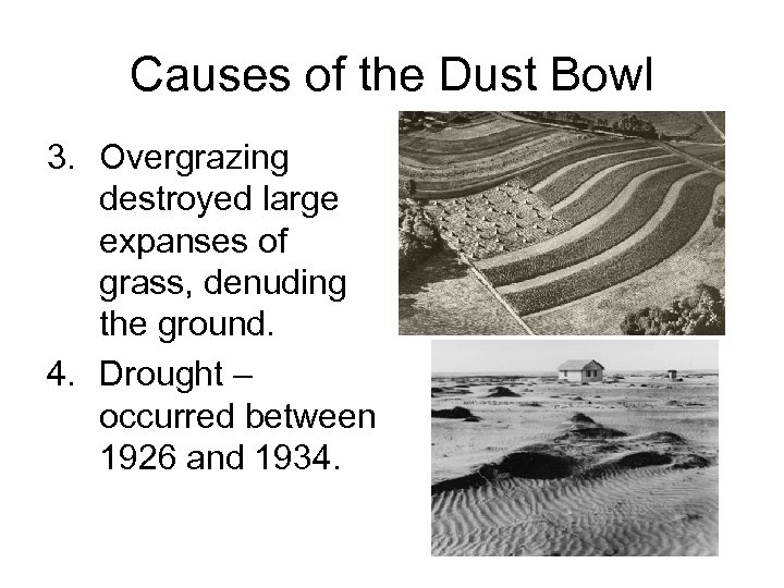 Causes of the Dust Bowl 3. Overgrazing destroyed large expanses of grass, denuding the
