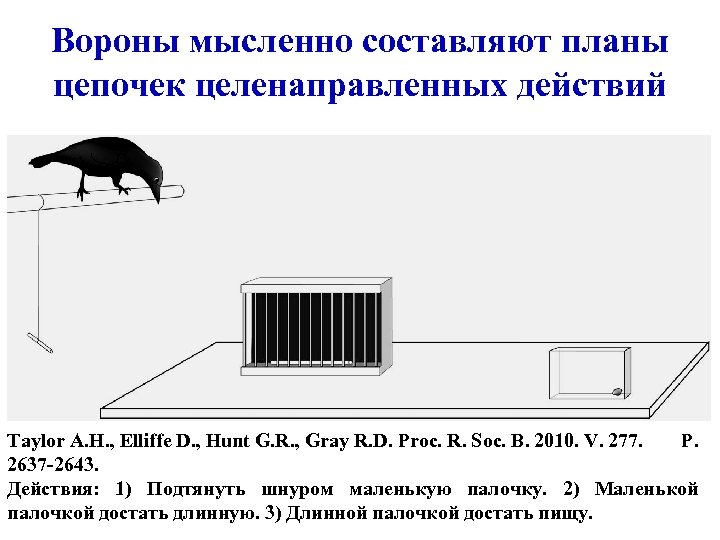Вороны мысленно составляют планы цепочек целенаправленных действий Taylor A. H. , Elliffe D. ,