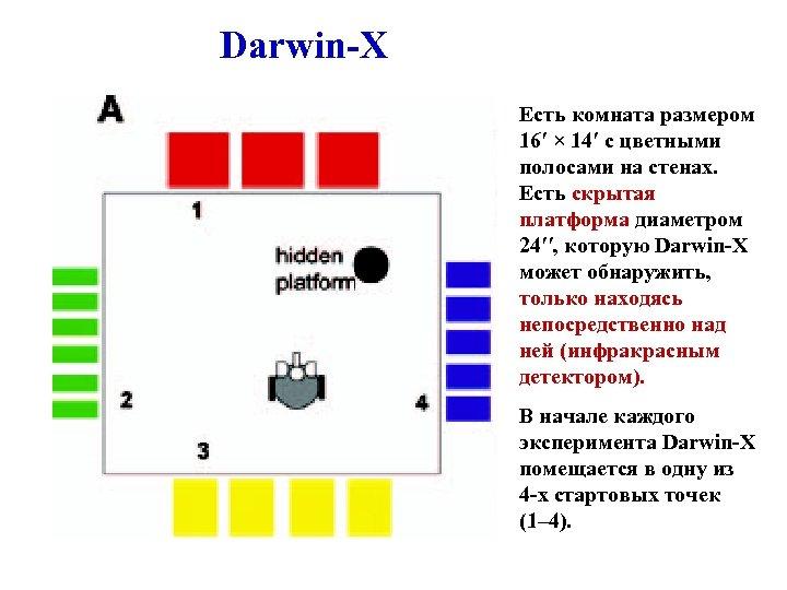 Darwin-X Есть комната размером 16′ × 14′ с цветными полосами на стенах. Есть скрытая