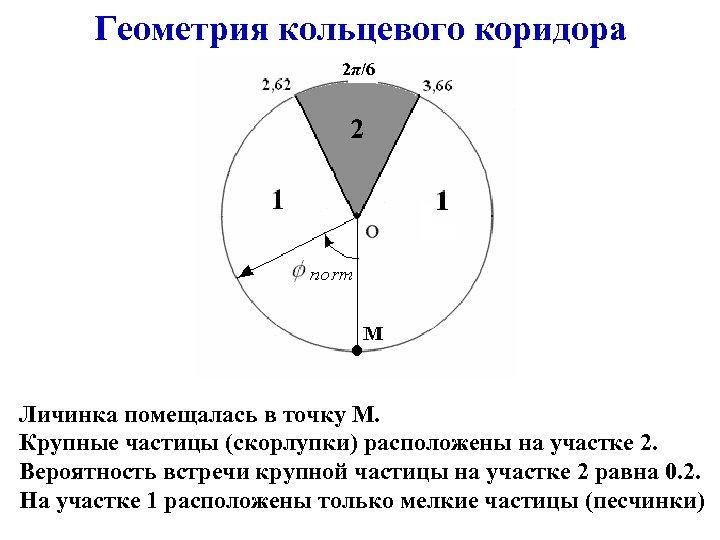Геометрия кольцевого коридора 2π/6 Личинка помещалась в точку М. Крупные частицы (скорлупки) расположены на