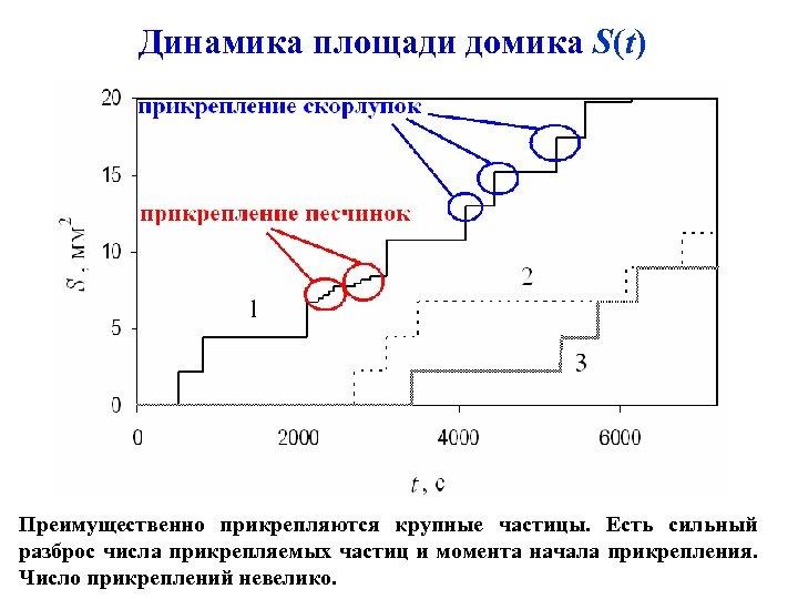 Динамика площади домика S(t) Преимущественно прикрепляются крупные частицы. Есть сильный разброс числа прикрепляемых частиц