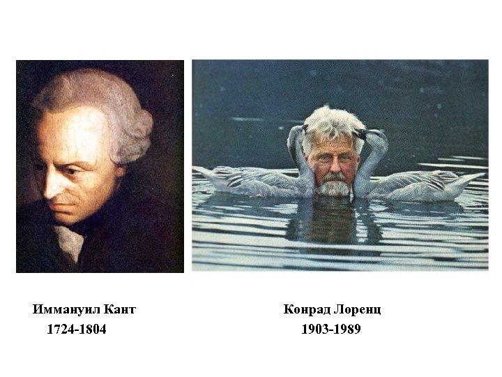 Иммануил Кант 1724 -1804 Конрад Лоренц 1903 -1989