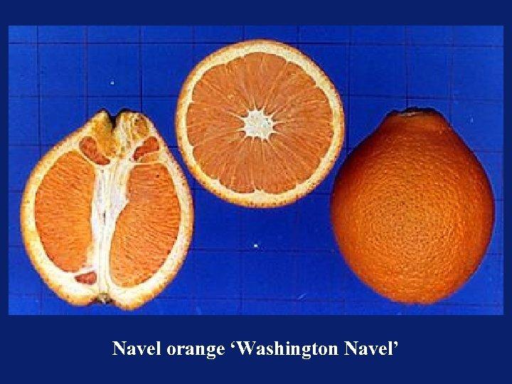 Navel orange 'Washington Navel'