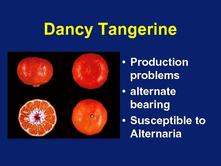 Dancy Tangerine • Production problems • alternate bearing • Susceptible to Alternaria