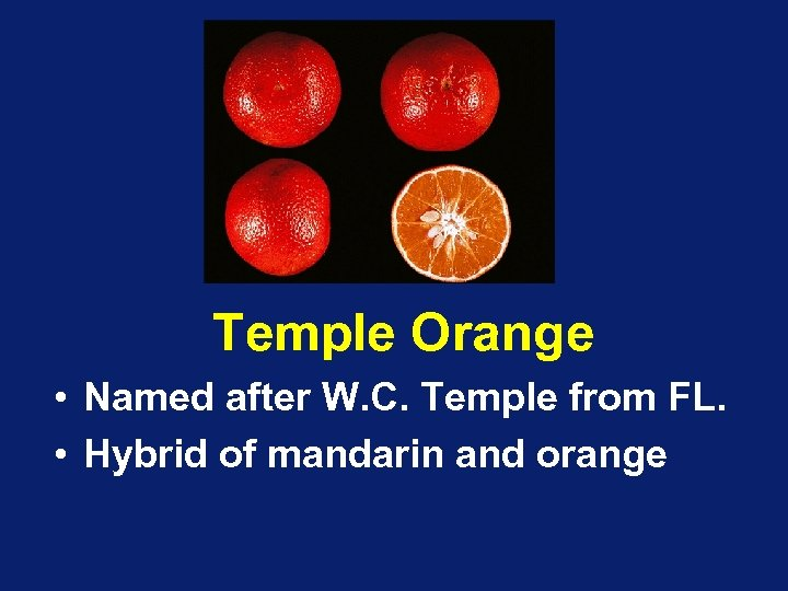 Temple Orange • Named after W. C. Temple from FL. • Hybrid of mandarin