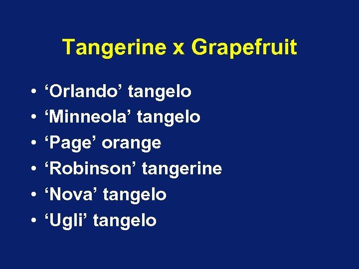 Tangerine x Grapefruit • • • 'Orlando' tangelo 'Minneola' tangelo 'Page' orange 'Robinson' tangerine