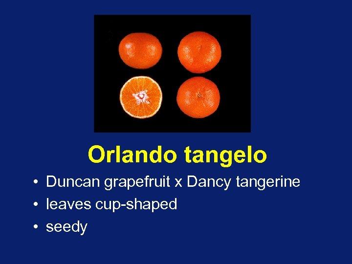 Orlando tangelo • Duncan grapefruit x Dancy tangerine • leaves cup-shaped • seedy
