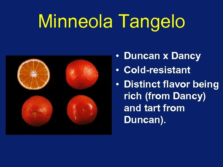 Minneola Tangelo • Duncan x Dancy • Cold-resistant • Distinct flavor being rich (from