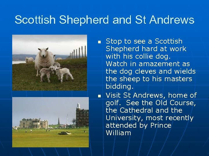 Scottish Shepherd and St Andrews n n Stop to see a Scottish Shepherd hard