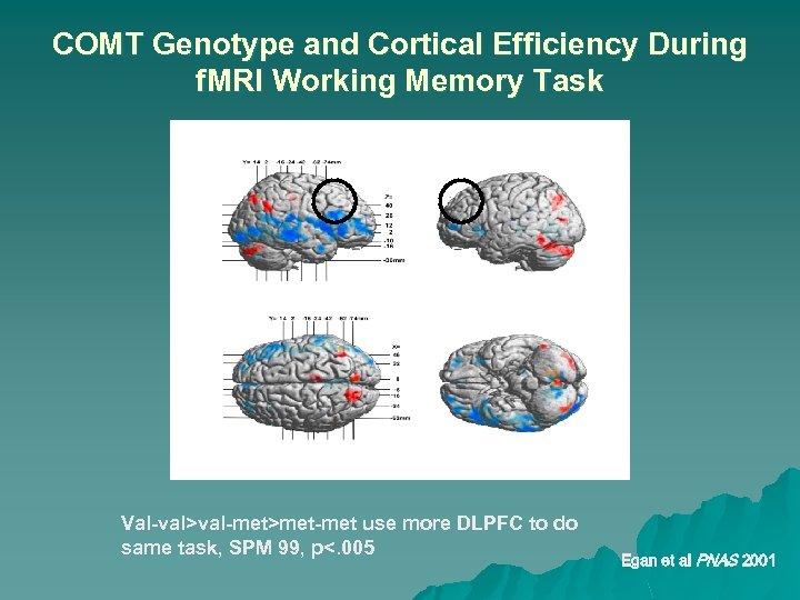 COMT Genotype and Cortical Efficiency During f. MRI Working Memory Task Val-val>val-met>met-met use more